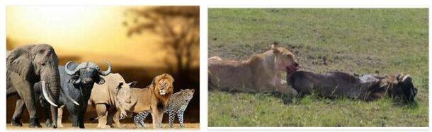 The Big Five Safari in Tanzania